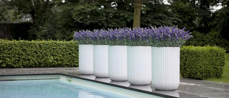 Link to page Picture of white planters with lavendars
