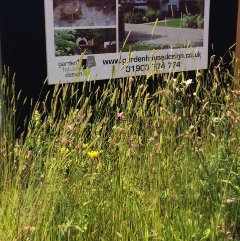 Wildflower Turf at Hampton Court Flower Show