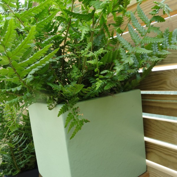 Create instant living art by putting small planters onto fences and walls