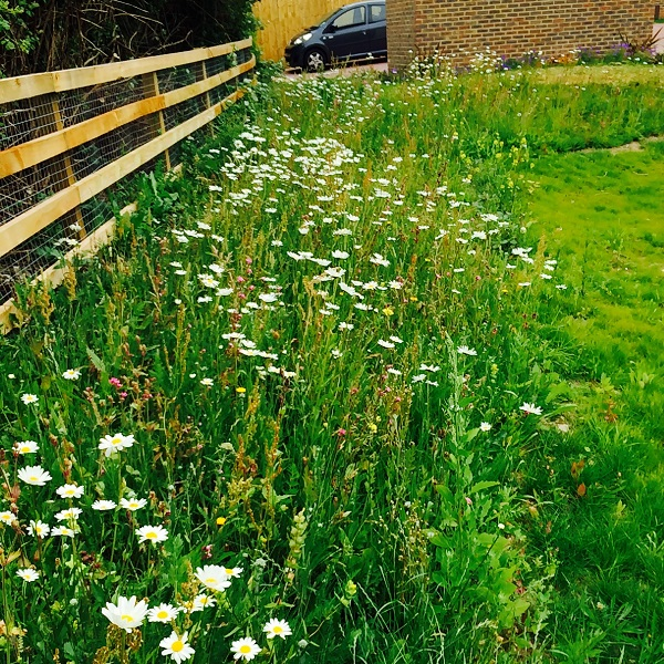 Wildflower Turf in a communal area makes a good feature