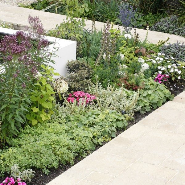 Pretty flower beds between a white rendered raised wall and a pathway