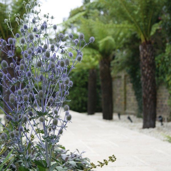 A purple thistle and tree ferns create a beautiful pathway through the garden
