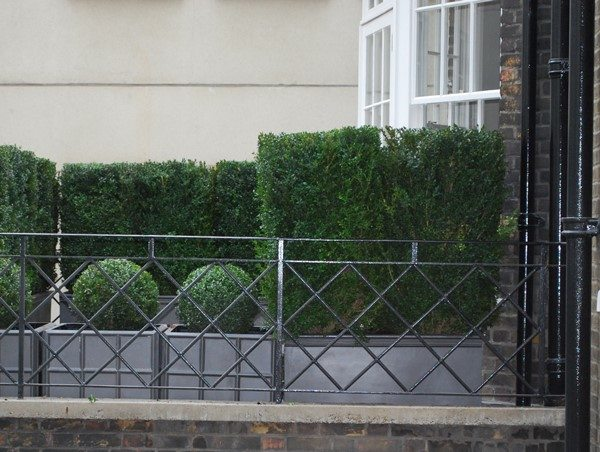 Rooftop terrace with fibreglass Geo planters and large evergreens