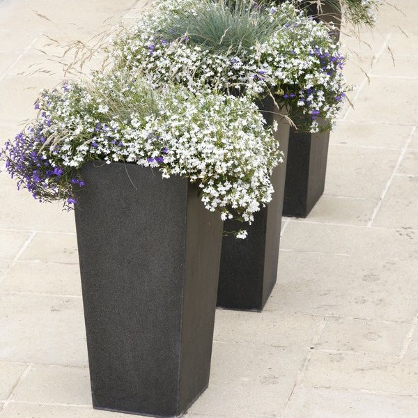 Fibreglass Geo Tapered Planters with soft planting in whites and purples