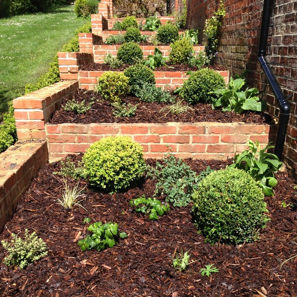 simple buxus plants add structure to formal planting beds