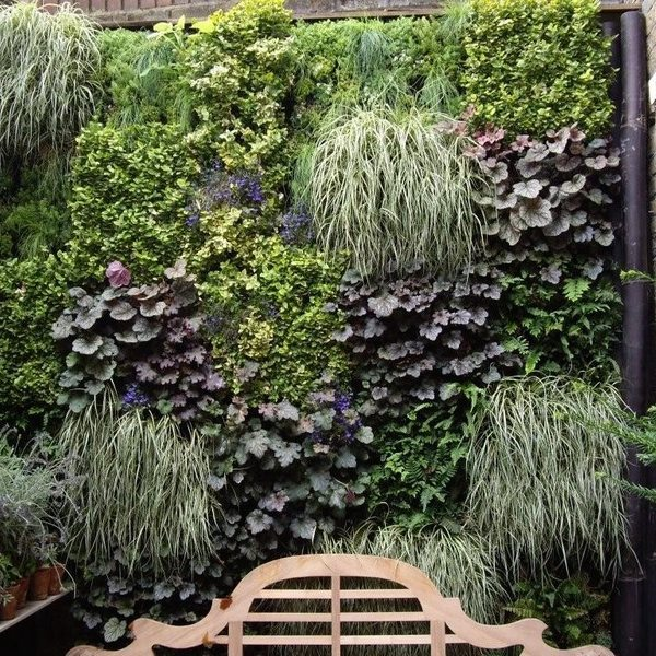 This urban garden has been transformed with a living wall to utilise the minimum space