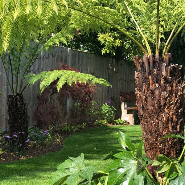 Designed and Planted with a Tropical Jungle Planting Scheme