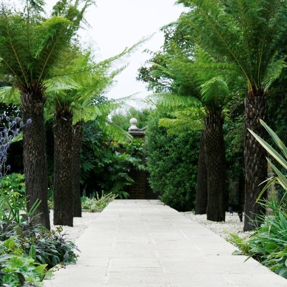Marshall's paving pathway with tree ferns either side