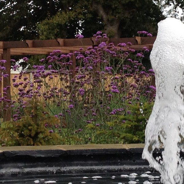 Water feature shot capturing the fountain in action with lavender planting