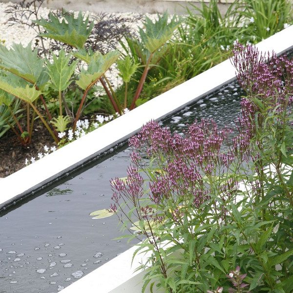 Water feature with soft planting around it's rendered wall edges