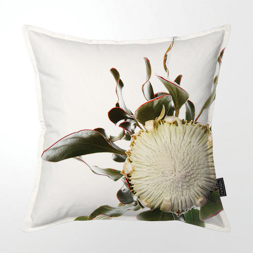 View Feinbos Protea Cushion details